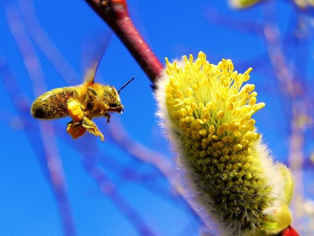 La ciencia del polen