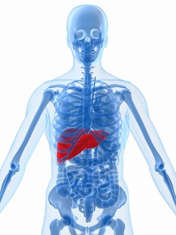 Hígado, más allá de la bilis