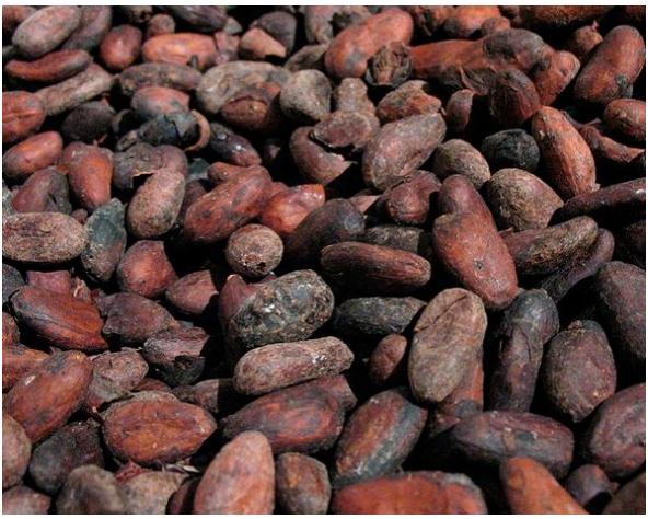 10 Datos curiosos sobre el cacao