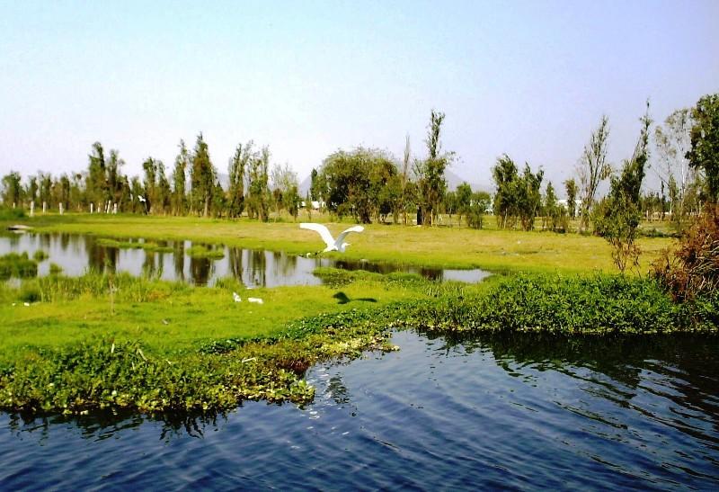 Laboratorio de Restauración Ecológica y los Ajolotes