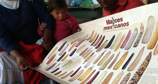 """FUNAM participa en """"Semillatón""""  para rescatar especies de maíz en la Sierra Tarahumara"""