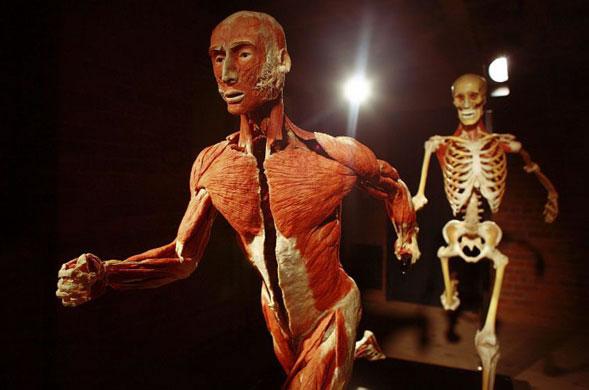 Plastinación, un encuentro con el cuerpo humano