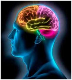 Nuestro cerebro durante el sueño