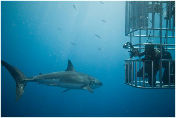 Una tarde con el gran tiburón blanco