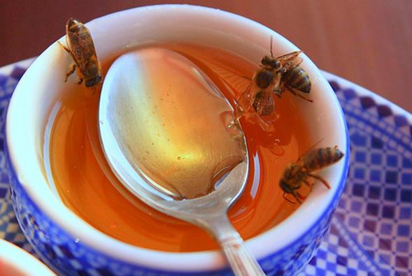 Un dulce aliado, la miel de abeja
