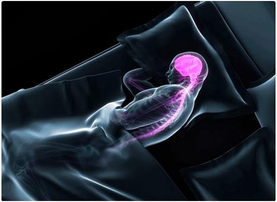 Dormir limpia el cerebro