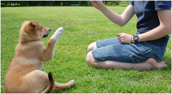 Los perros tienen mucho de persona