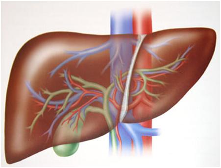 El hígado: el gran filtro del cuerpo | Descubre Fundación UNAM
