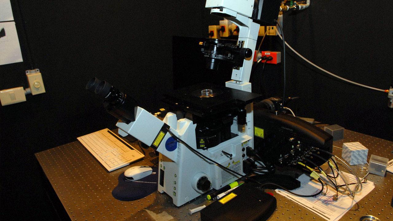 microscopia_contenido1